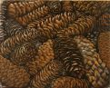 pine cones (medium size)